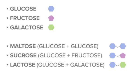 Disachariden - simpele koolhydraten (suikers)